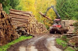 primaria-borsa-va-incepe-cu-un-nou-departament-de-tip-srl-prelucrarea-lemnului1370261413