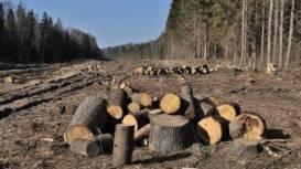 Cinci-asociatii-din-domeniul-forestier-cer-retragerea-proiectului-de-modificare-a-Codului-Silvic-din-Parlament